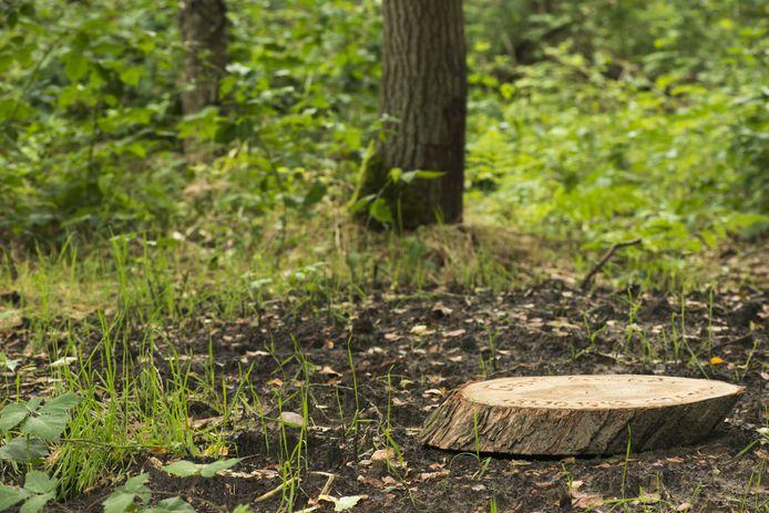 Een boomschijf met meestal de naam van de overledene en een datum is het enige waar een natuurgraf aan te herkennen is.