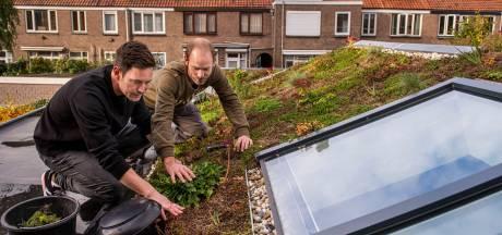 Subsidie voor meer groene initiatieven in Breda