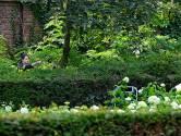 Hoofdbrekens om verdwaalde ree in Tilburg: 'Bambi' is niet te vangen