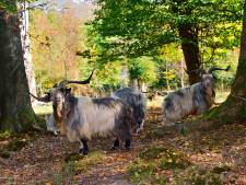 Met rangers van Tierpark Nordhorn geheimen van kloosterbos in Bardel ontdekken