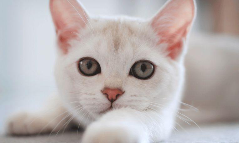 Dit invalide katje was aan z'n lot overgelaten door zijn baasje