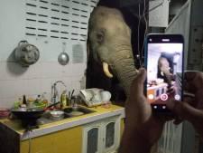Un éléphant dans la cuisine: une famille thaïlandaise reçoit la visite répétée d'un mastodonte