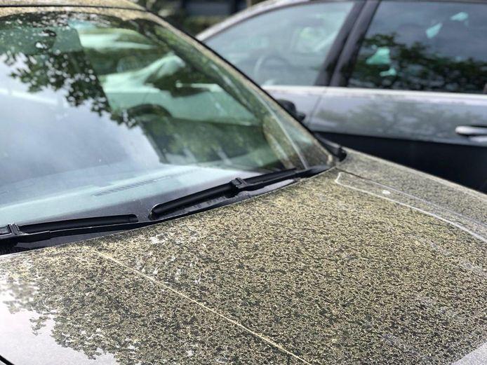 Stuifmeel kan beter niet zomaar met een spons worden verwijderd.