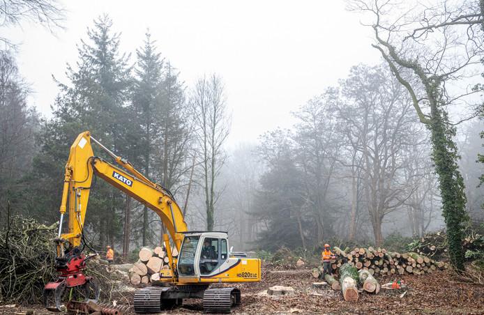 t.b.v. de Gelderlander / de Vallei Ede 21/01/2020 kappen bomen i.v.m. aanleg Parklaan, Klinkenbergerweg / Berkenlaan opdrachtnr. 208261 foto: Herman Stöver t.b.v. de Gelderlander DGFOTO de Vallei