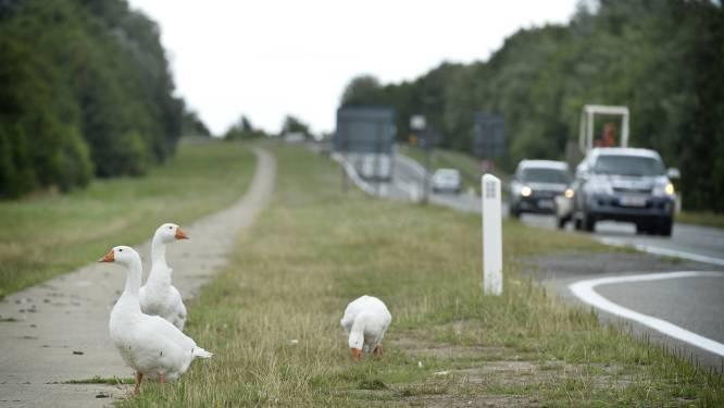 """Extra groen langs tracé N41: """"Zonder twijfel groot ecologisch voordeel"""""""
