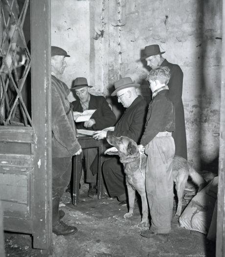 Welke trekhonden kwamen in 1949 door de keuring in Eindhoven?
