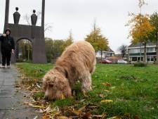 In Steenwijkerland is het tijd voor 'cadeautjes': hondenbelasting stopt en OZB blijft gelijk