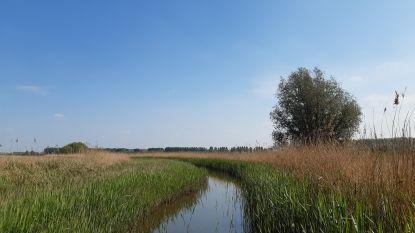 """Twee natuurpareltjes in Boekhoute gevrijwaard: """"Ecologische waarde erg groot"""""""