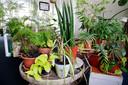 Een overzicht van kamerplanten uit het plantenasiel van Fem.