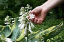In een voedselbos worden vooral eetbare struiken en bomen en aangeplant.