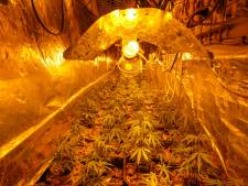 Politie vindt hennepkwekerijen in Geldrops huis, maar kan bewoners niet aanhouden door coronabesmetting