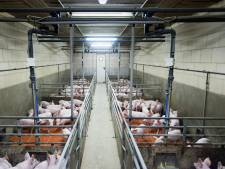 Varkenshouder uit Sint-Oedenrode wil schadevergoeding van provincie