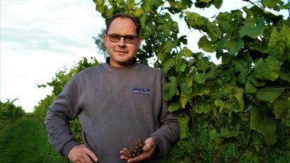 Houtlandse wijn ook met Koekelaarse druiven