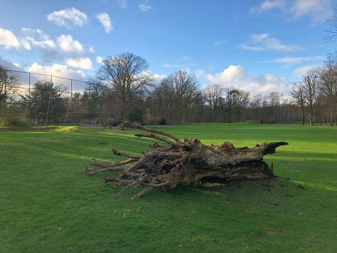 De holle boom is geveld.