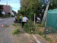 Plaine des sports de Seraing: chaque arbre abattu sera remplacé
