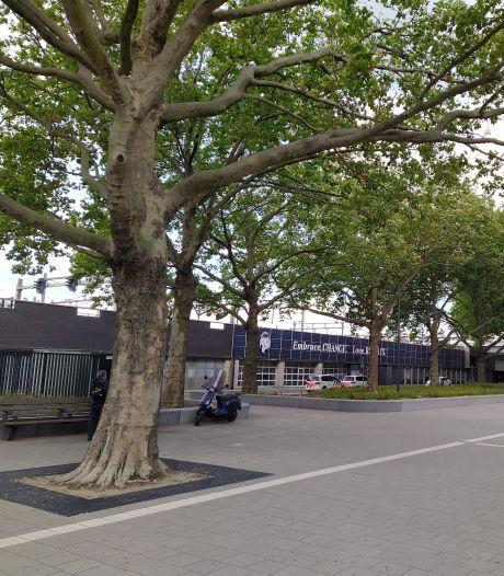 Bomenridders willen dat rechter kap platanen bij Rotterdam Centraal dwarsboomt