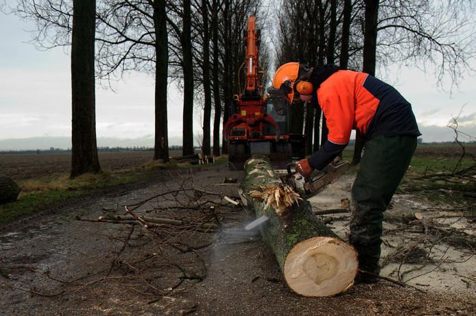 Bomen worden gerooid in opdracht van het waterschap.
