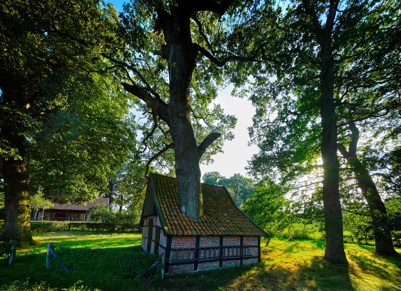 De bakspiekerboom in Overijssel.