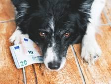'Blinde' controle op hondenbelasting in Pijnacker-Nootdorp