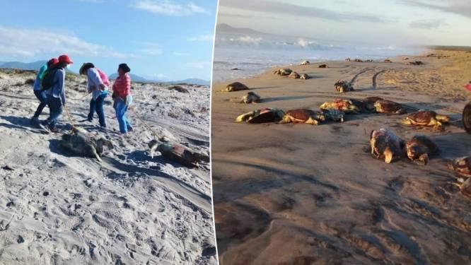 Honderden dode schildpadden aangetroffen op Mexicaans strand