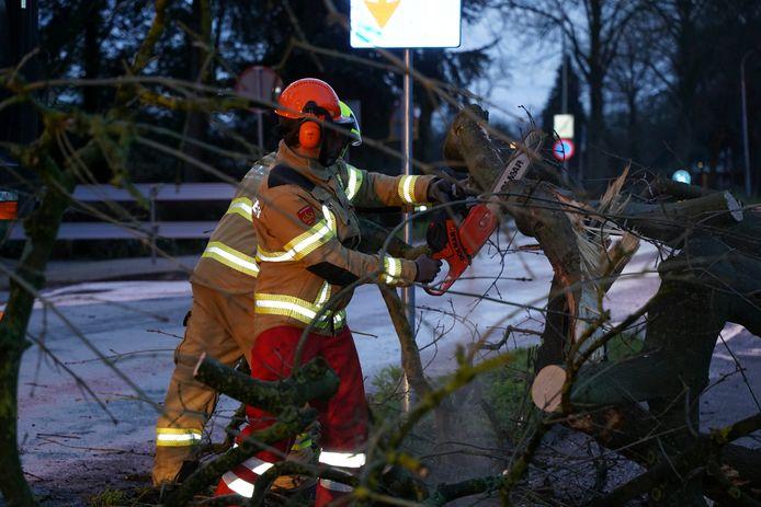 De brandweer ruimt een omgevallen boom op aan de Babberichseweg in Zevenaar.