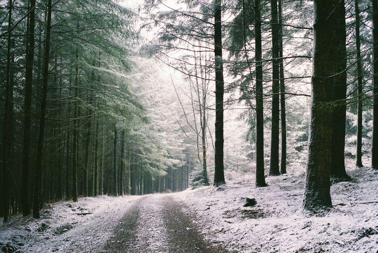 In de Ardennen blijft de sneeuw naar verwachting tijdelijk liggen. Beeld Shutterstock