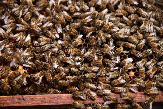 Een bijenkolonie is nochtans niet voor iedereen even aantrekkelijk.