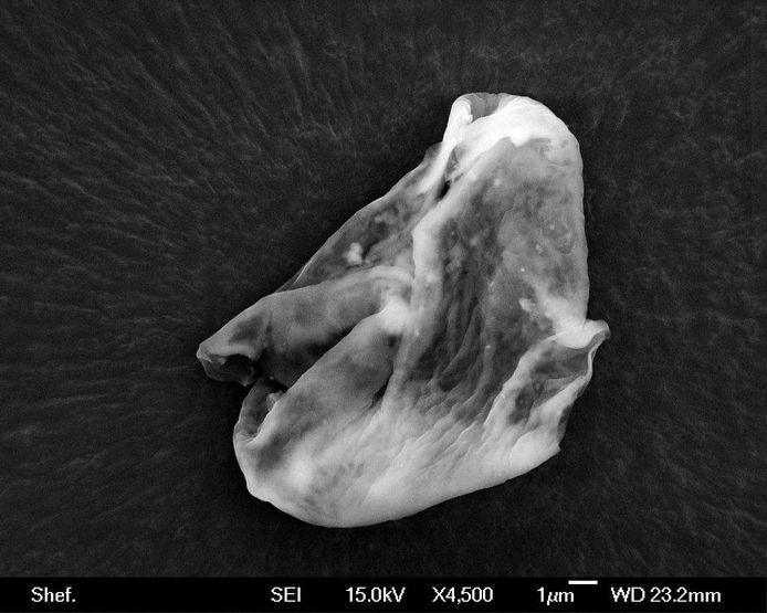 Een organisme waarvan wetenschappers claimen dat het bewijs is voor buitenaards leven