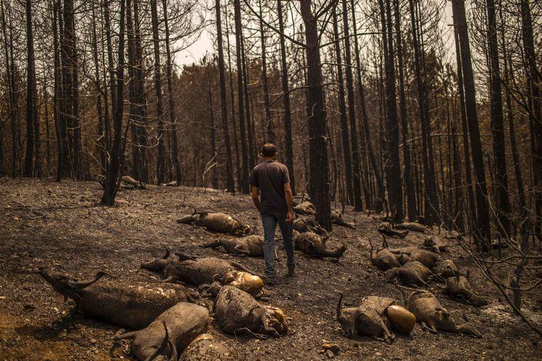 Alleen al in Griekenland woeden 500 branden. Een herder op het eiland Evia verloor zijn kudde van 372 geiten aan het vuur. Beeld AFP