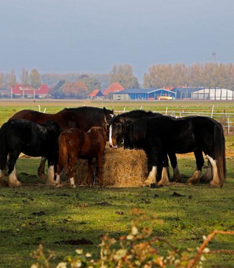 Zeer dodelijke paardenziekte uitgebroken in Hardenberg
