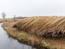 Onbegrip bij riettelers in De Weerribben: 'Proeven niet van toepassing op ons gebied'