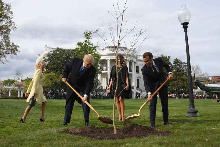 Het boompje wordt gepland, vorig jaar. Beeld AFP