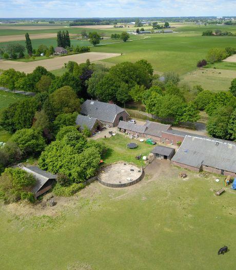 Zorgen op het platteland in Oost-Nederland: verdwijnt vee en komen drugs terug?
