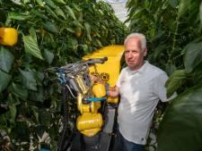 Robots rukken op in de kassen, groene kennis bij telers steeds schaarser