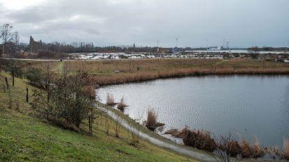 """Gemeente wil groener worden: """"Tegen 2025 moet 12 procent van Hemiksem open ruimte zijn"""""""