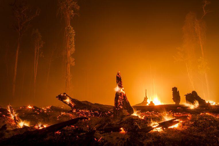 Brandende boomstronken op Palangkaraya op Borneo, waar bos plaatsmaakte voor een palmolieplantage. Beeld Getty Images