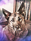 Kees Thies' hond Blafmans is afgelopen dinsdag ingeslapen.