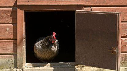 Pseudovogelpest ook in Ninove vastgesteld