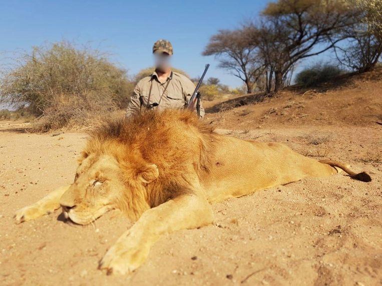 Belgische bedrijven bieden slachtsafari's aan binnen Europa, naar Amerika en Rusland maar vooral Afrika.