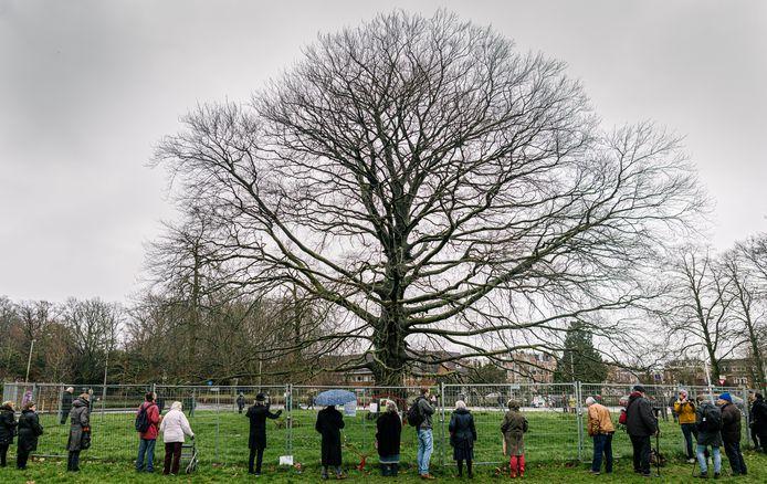Bezoekers nemen een minuut stilte in acht voor de stervende beuk aan de Emmalaan in Utrecht-Oost. De iconische boom is doodziek en wordt binnenkort door de gemeente geveld.