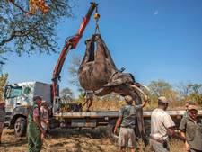 Nederlanders helpen bij grootste verhuizing van olifanten ooit