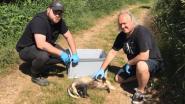 Animal Rescue Service bezorgd na dood van twee dassen