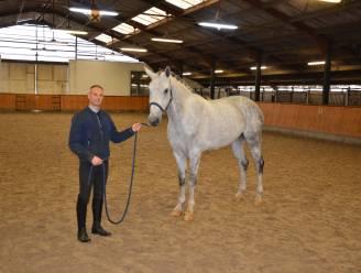 """Floris en paard Origi kronen zich kampioen in Beker van België voor Jonge Dressuurpaarden: """"Eén van de beste paarden die hier al op stal stond"""""""