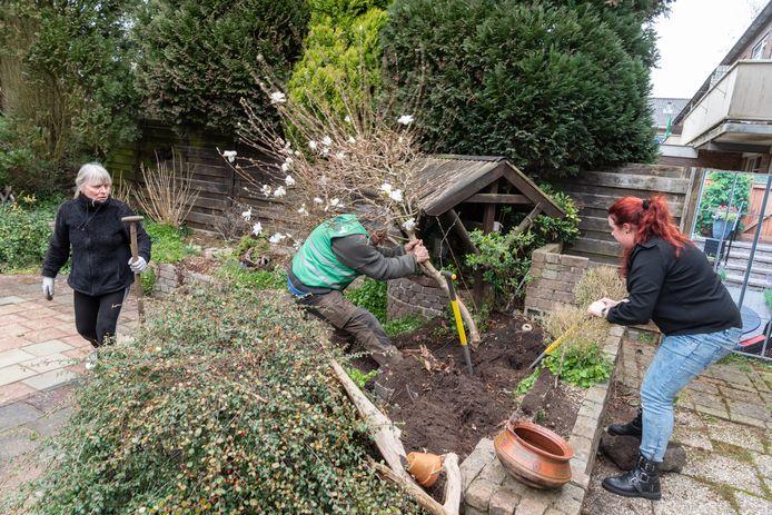 Linda Veldkamp (27) trekt met behulp van een 'professionele struikrover' vakkundig een magnolia uit een tuin aan de Moerbessenberg in Soesterberg