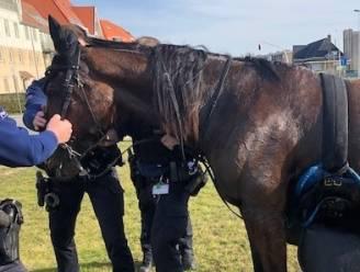 Losgeslagen paard veroorzaakt chaos langs Koninklijke Baan: politie kan gewond dier tegenhouden