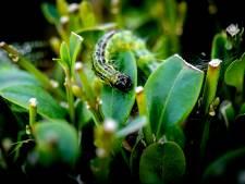 Wereldberoemde 'insectengoeroe' komt naar Delft