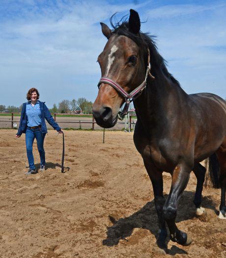 Paardencoaching in Haaksbergen beproefde therapie bij innerlijke onbalans: 'Paard trapt niet in mooie praatjes'