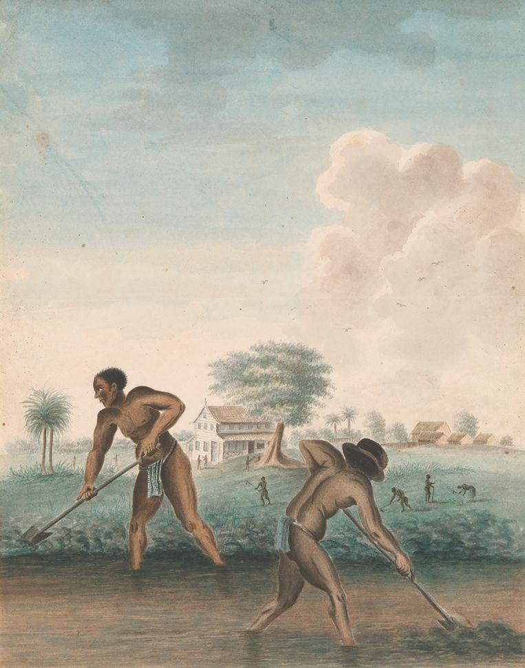 Het werk 'Tot slaaf gemaakte mannen graven trenzen' uit circa 1850, kunstenaar onbekend.  Beeld Rijksmuseum