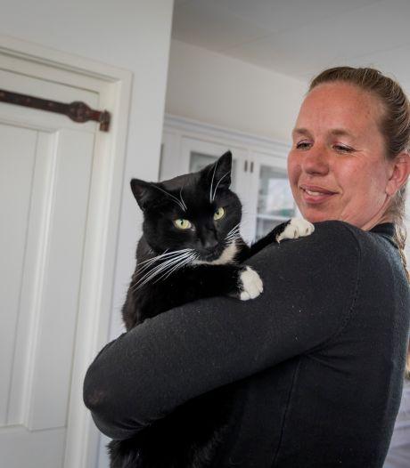 Kat Beau overleeft 'lift' door het halve land onder de motorkap: 'Met de meeste katten loopt het slecht af'