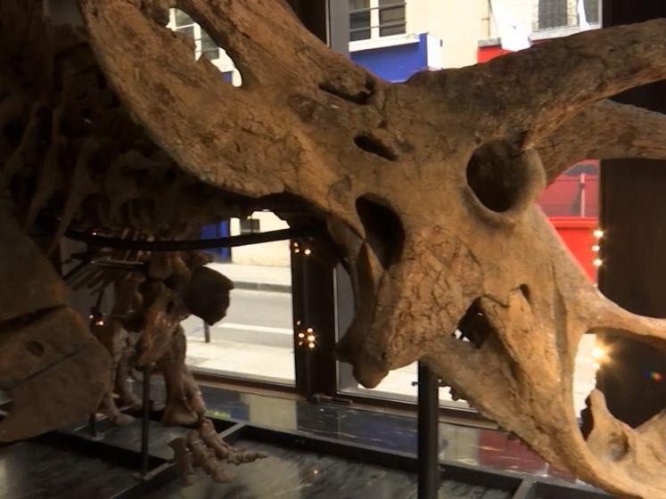 Grootste skelet van Triceratops ooit te koop voor 1,5 miljoen euro